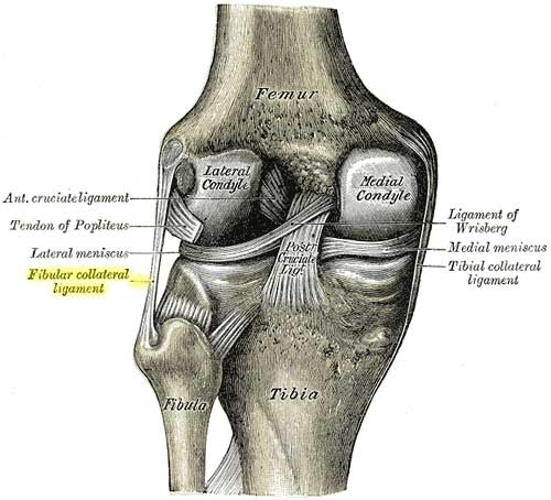 Proximal tibiofibular joint jc physiotherapy ccuart Choice Image